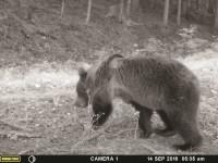 Valašsko děsí medvěd – Syn vzpěračky Orságové Christián měl namále