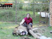 Práška zabil lev bez cizího zavinění