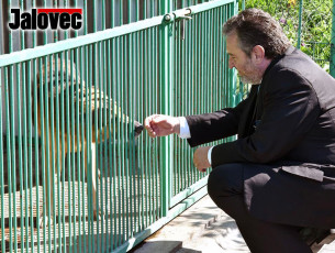 Valmez podpoří adopce psů. Starosta stržínek: Vemte si psa, zaplatíte míň
